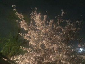 上の公園の桜