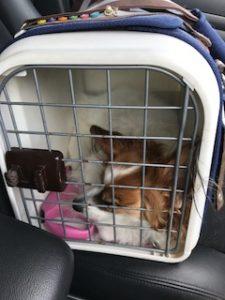 車内で移動中の愛犬
