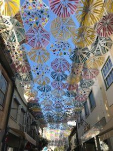 綺麗な傘達