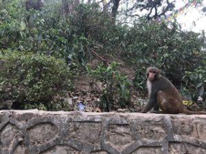 お寺にいる猿
