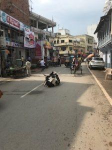 道路には牛が多発
