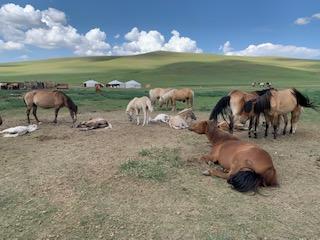 モンゴル(ウランバートル)大自然の中での海外乗馬旅行レビュー!